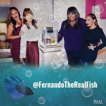 Are you following our fish Fernando?